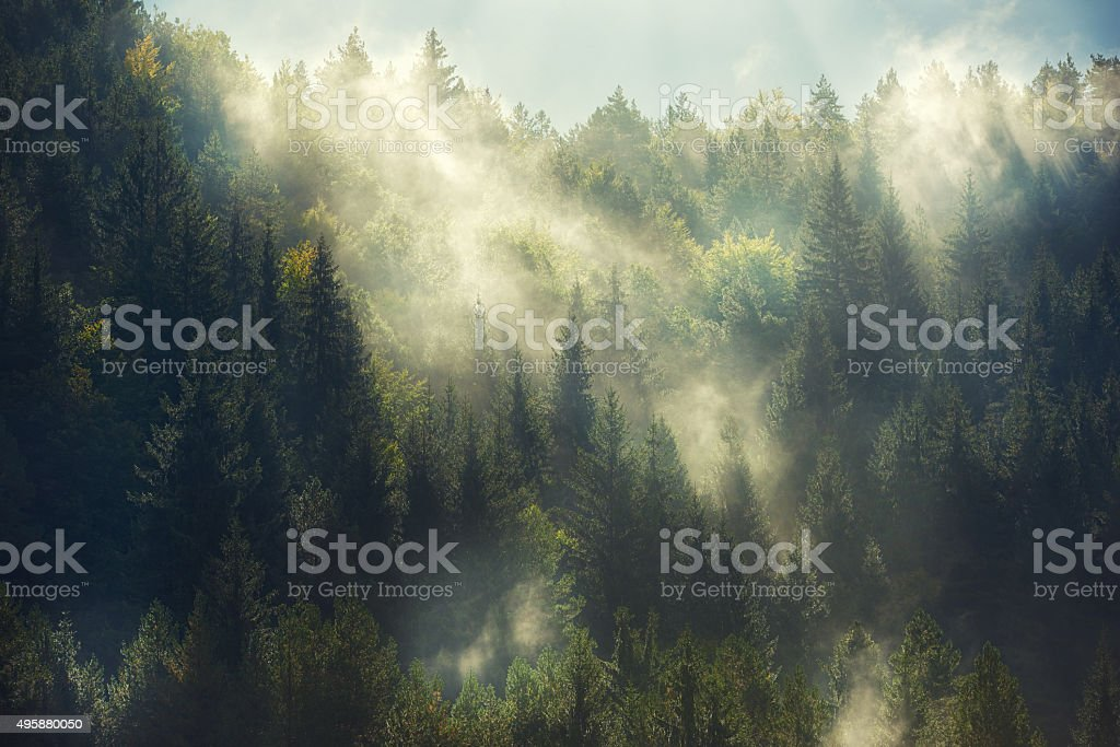 misty forest - Royalty-free Autumn Stock Photo