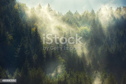 istock misty forest 495880050