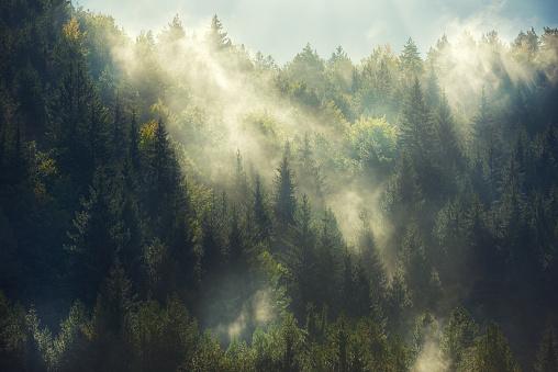 Trees in mist stock photos