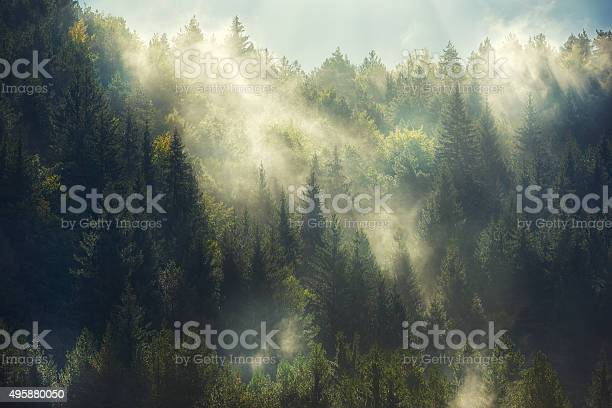 Photo of misty forest