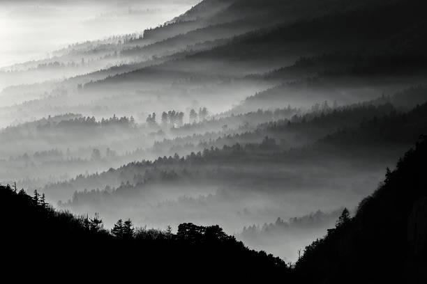 Misty forest stock photo