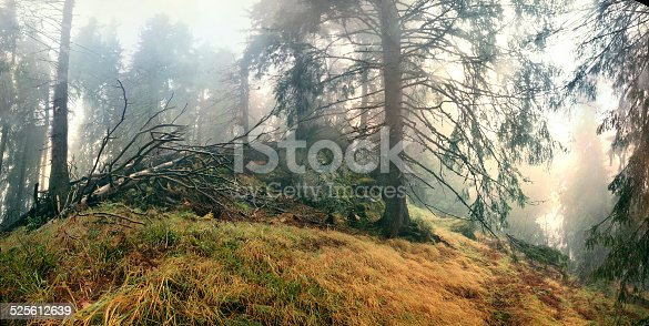 Wild Forests of the Carpathians are covered with thick fog after rain.