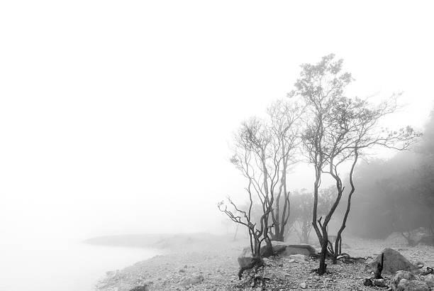 misty forest - kawah putih fotografías e imágenes de stock