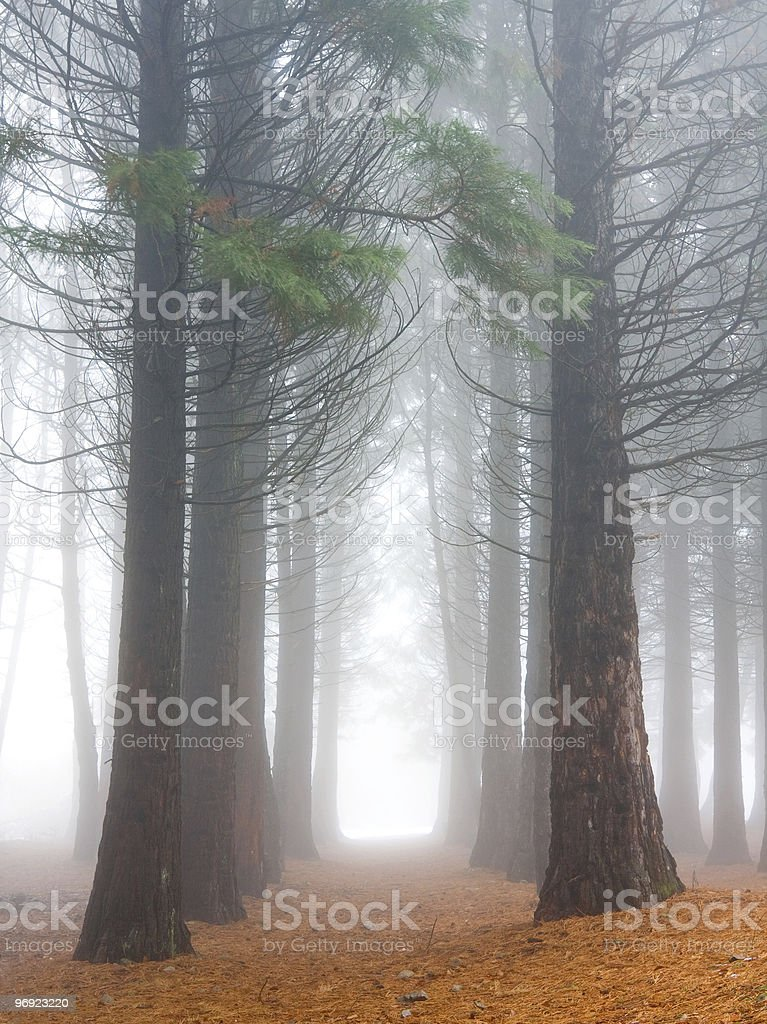 misty forest royalty-free stock photo