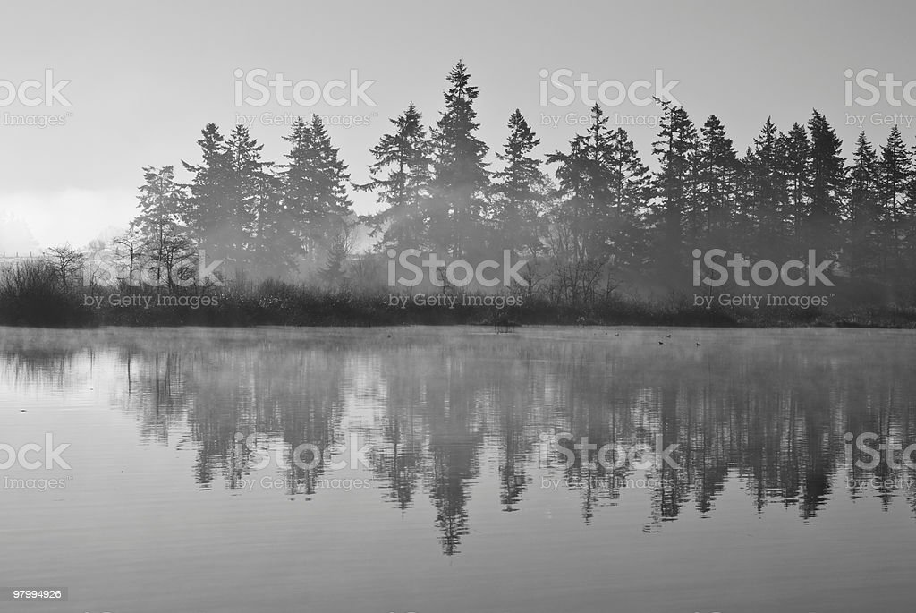 Misty Forest Reflection royalty-free stock photo