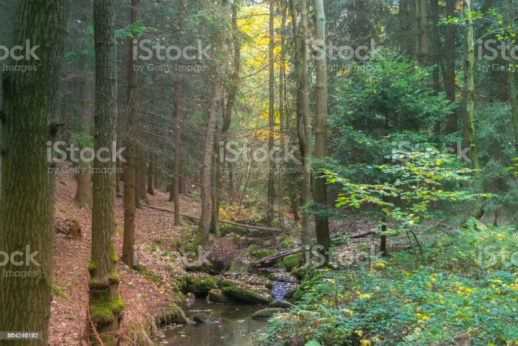 Misty forest stream in the fall royalty-free stock photo