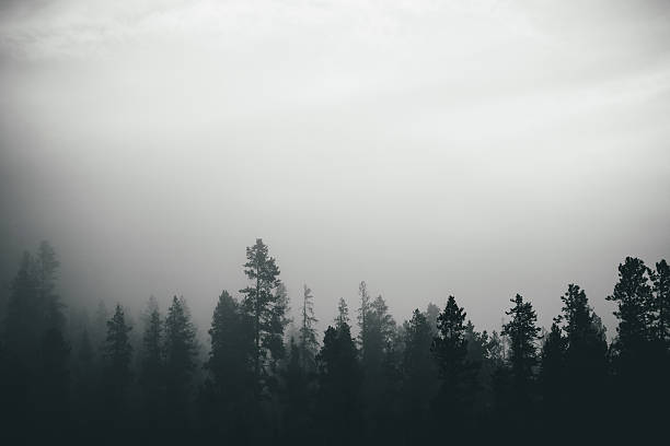 Misty Forest - Trees With Early Morning Fog stock photo
