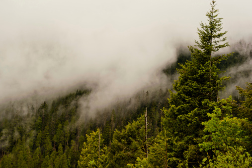 Misty Forest View off of WA I-90.