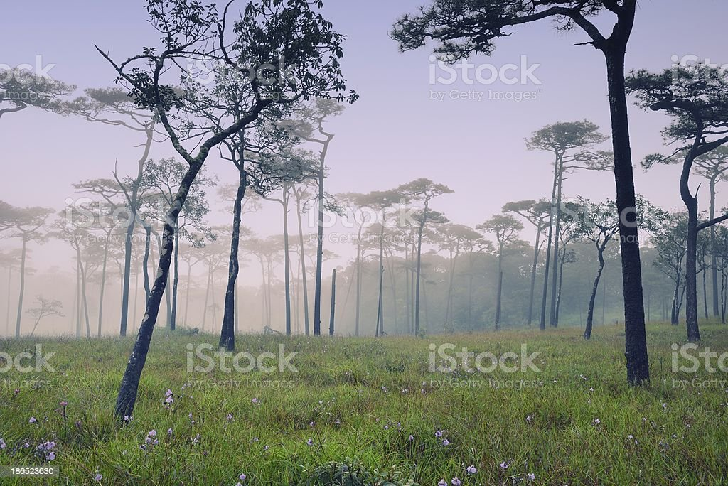 Misty forest with flowers on the ground royalty-free stock photo