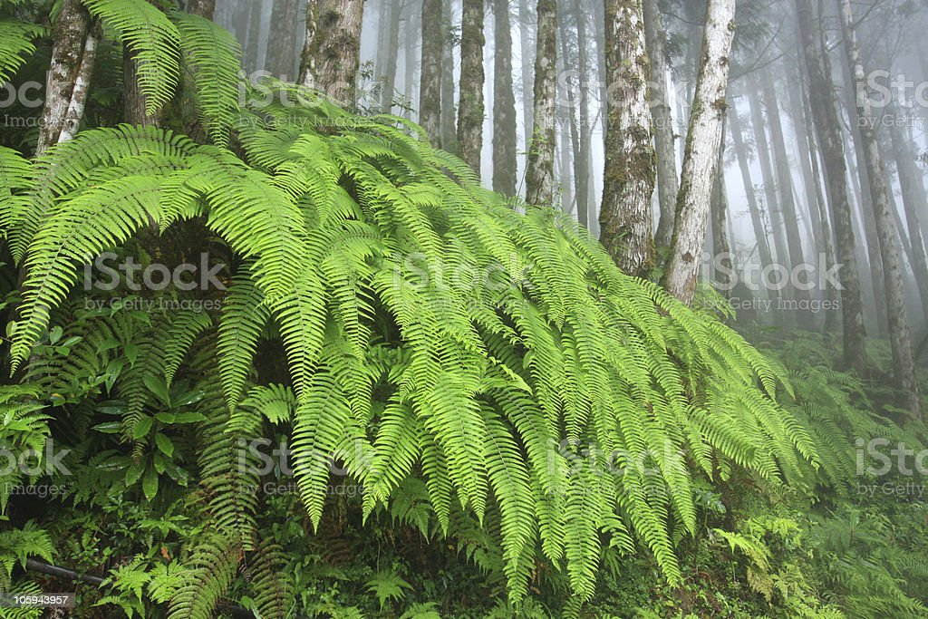 misty forest with green jungle scenery royalty-free stock photo