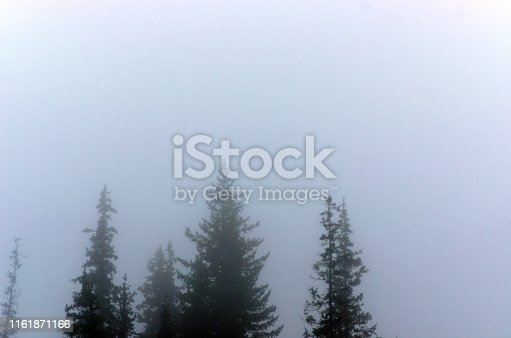 Misty haze blurs the silhouettes of the tops of fir trees in the wild Northern forest.
