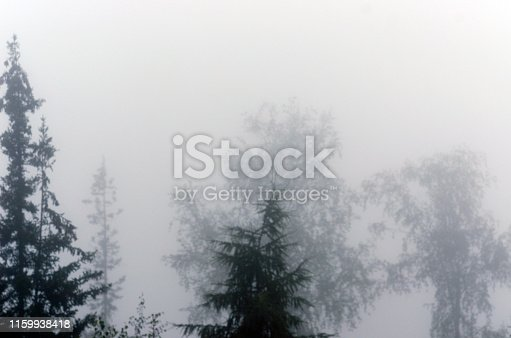 Misty haze blurs the silhouettes of trees in the forest.