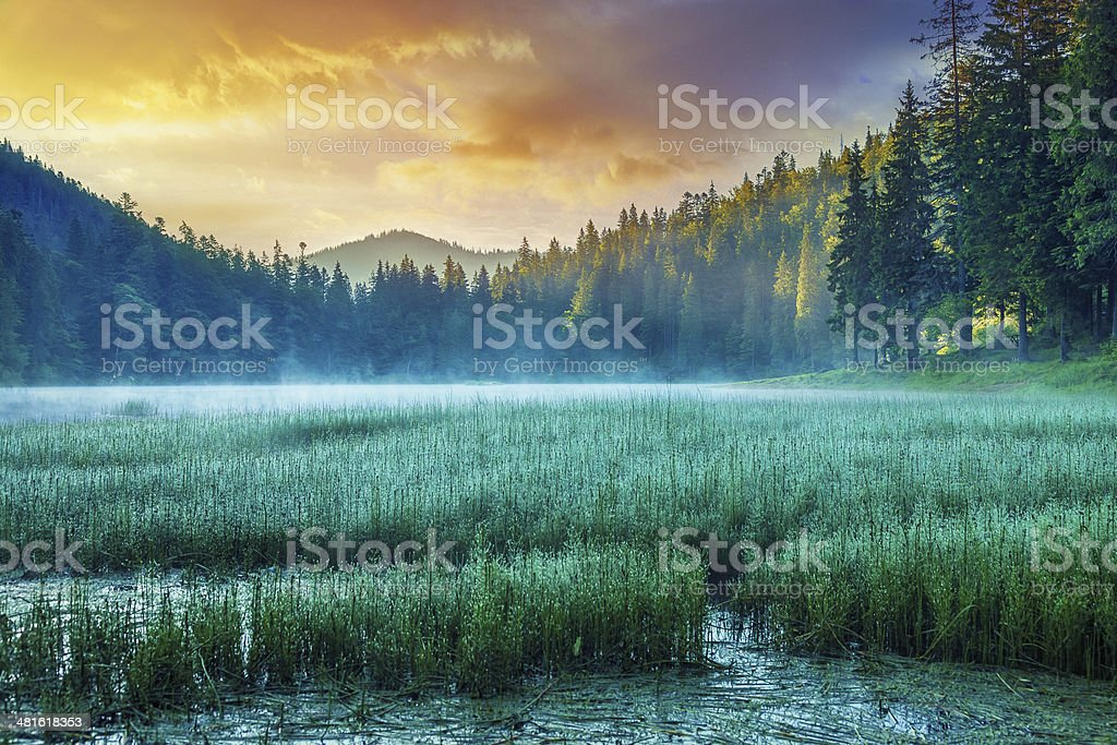 Misty Lake at Sunrise stock photo
