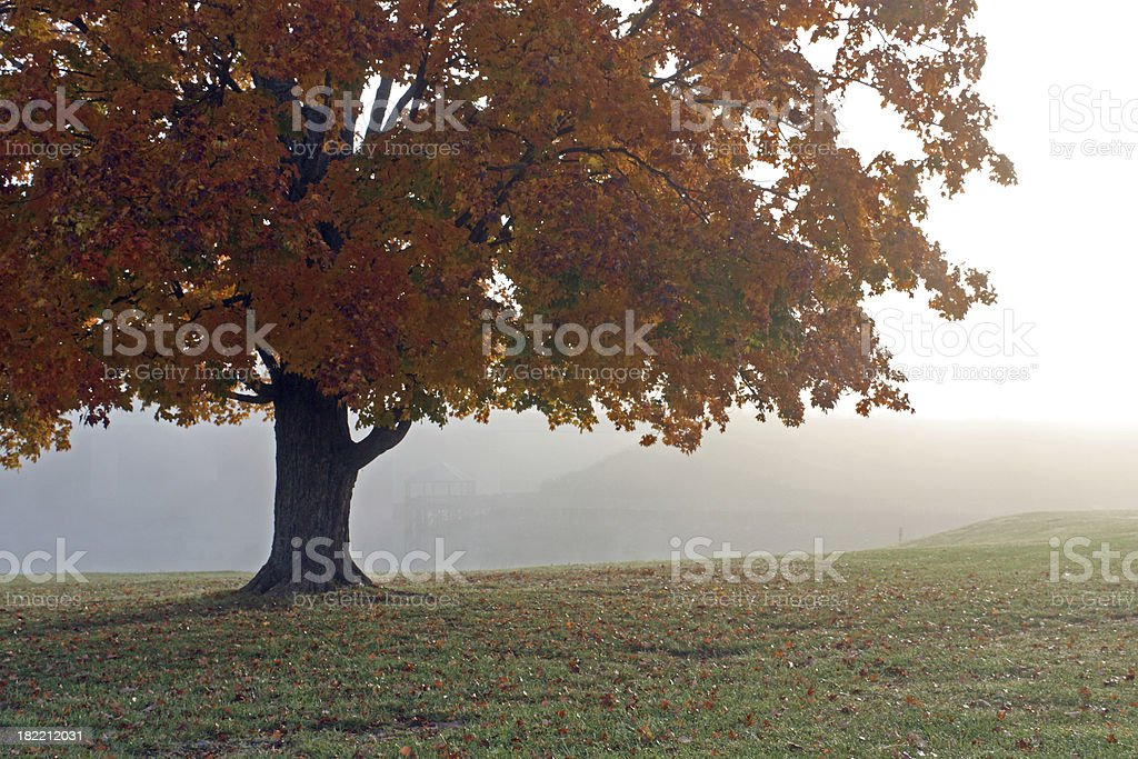 Misty Lakefront in Autumn royalty-free stock photo