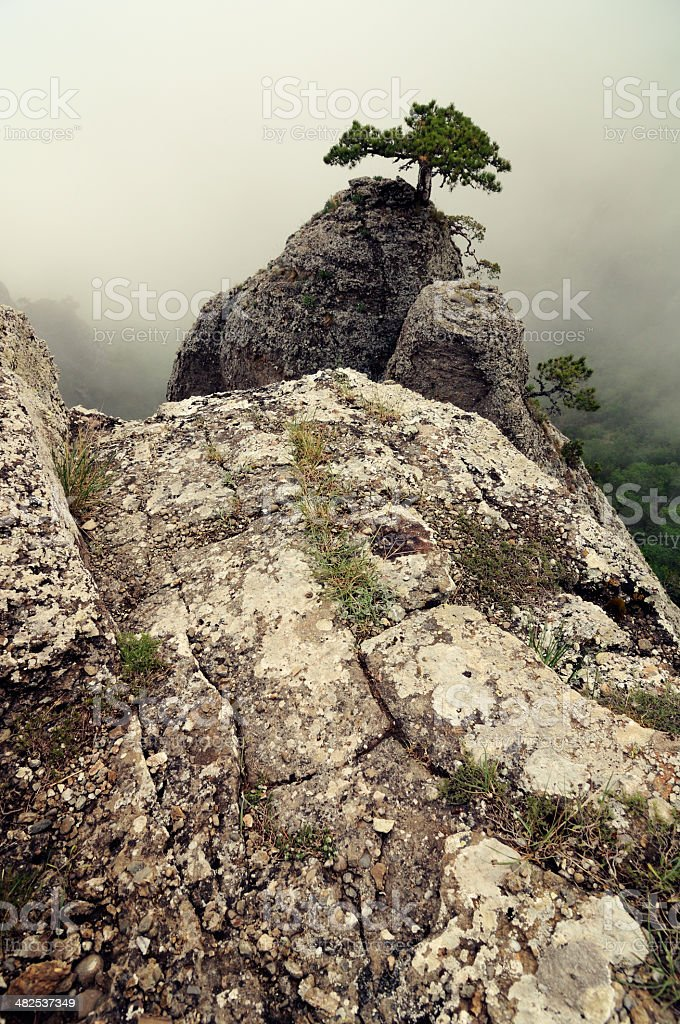 Misty landscape in mountains stock photo