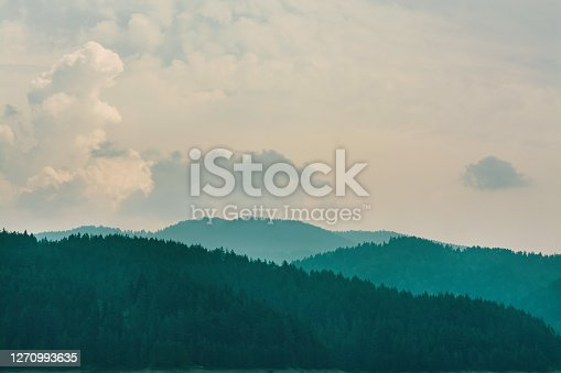 Misty mountain landscape with fir forest
