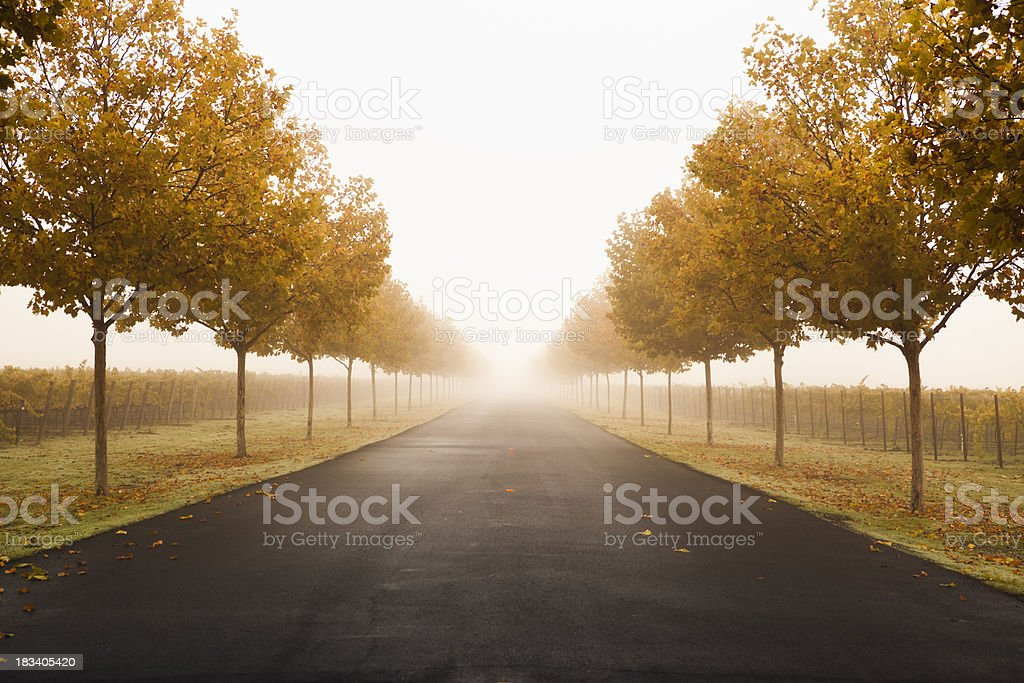 Misty lane in Napa Valley, California royalty-free stock photo