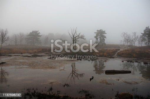 Misty morning in the heath area cold Brunssummerheide