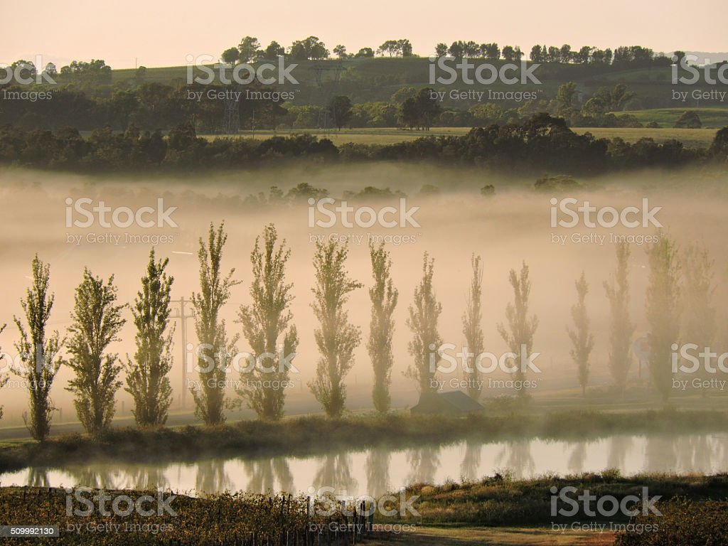 Misty morning amongst the trees at the waters edge stock photo