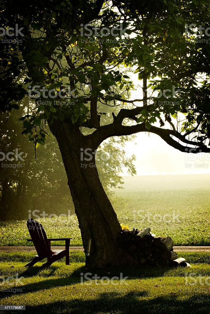 Misty Morning and Tree royalty-free stock photo