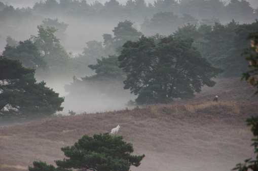 Misty morning in the heathland