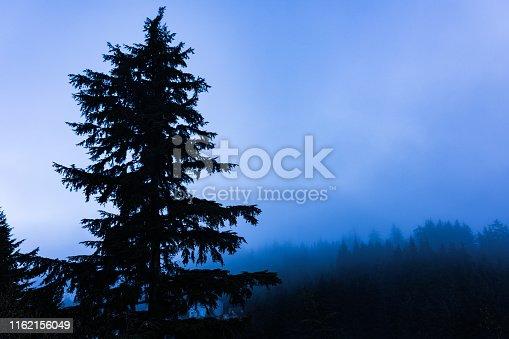 Calm morning landscape of mountain covered evergreens, Ketchikan, Alaska, USA
