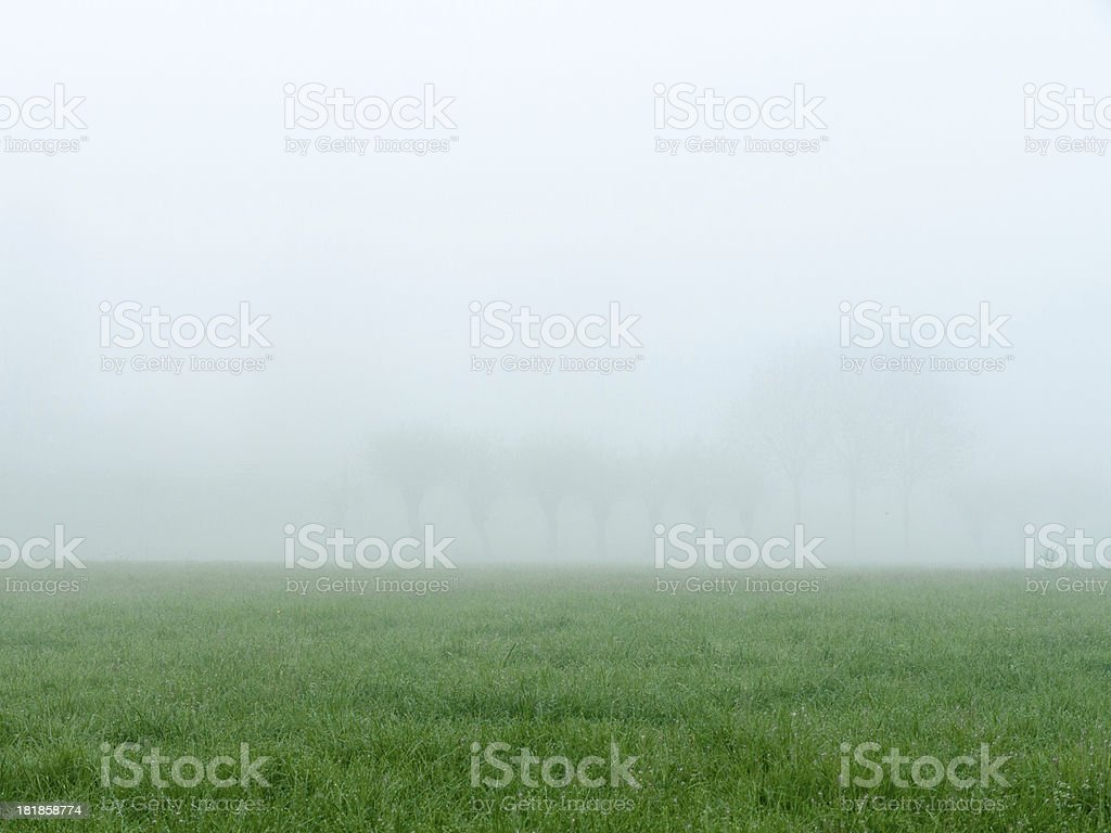 Misty morning Meadow royalty-free stock photo