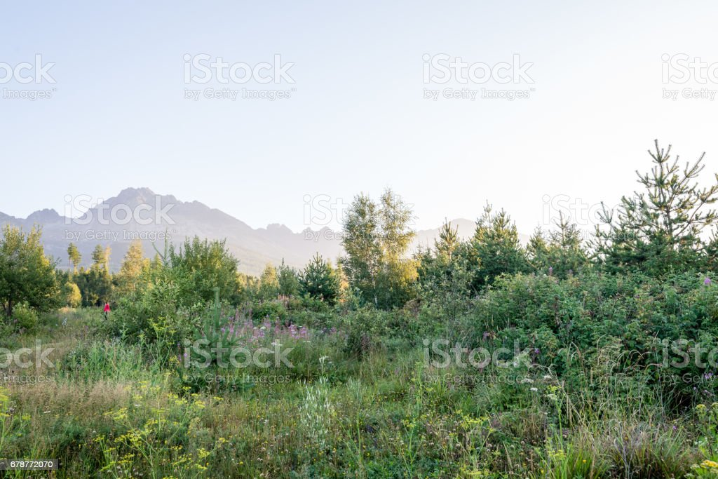 Misty sabah Dağ Manzaralı royalty-free stock photo