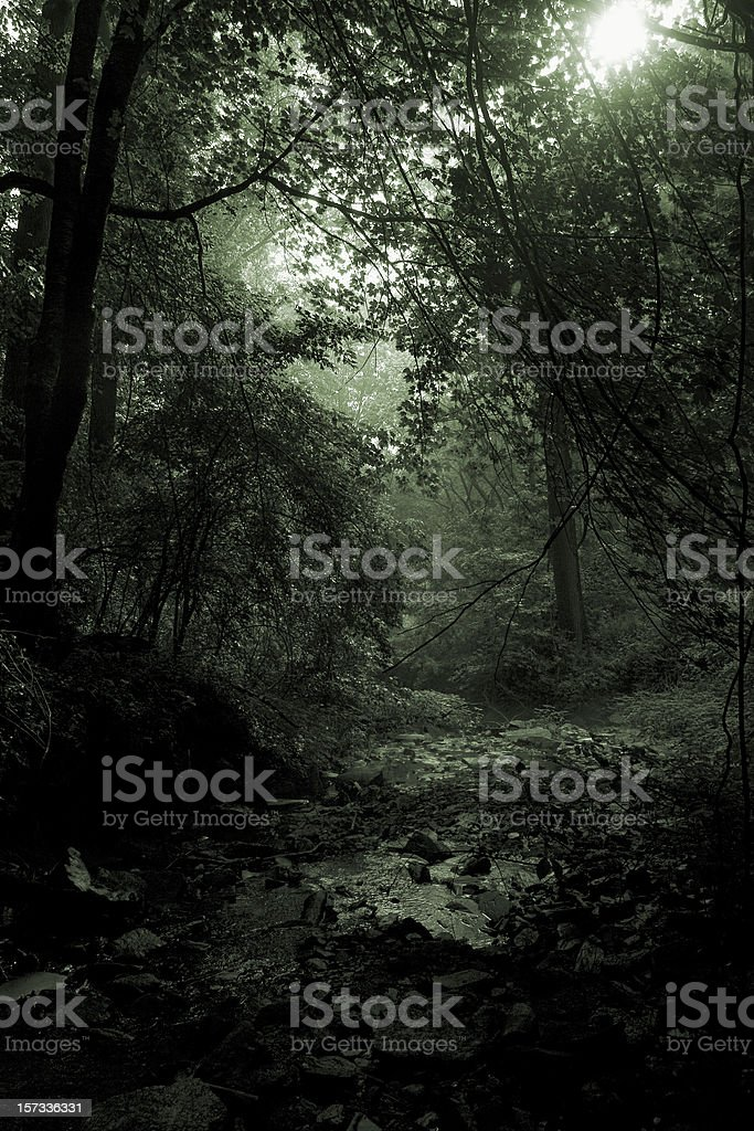 Misty morning scene in a forest royalty-free stock photo