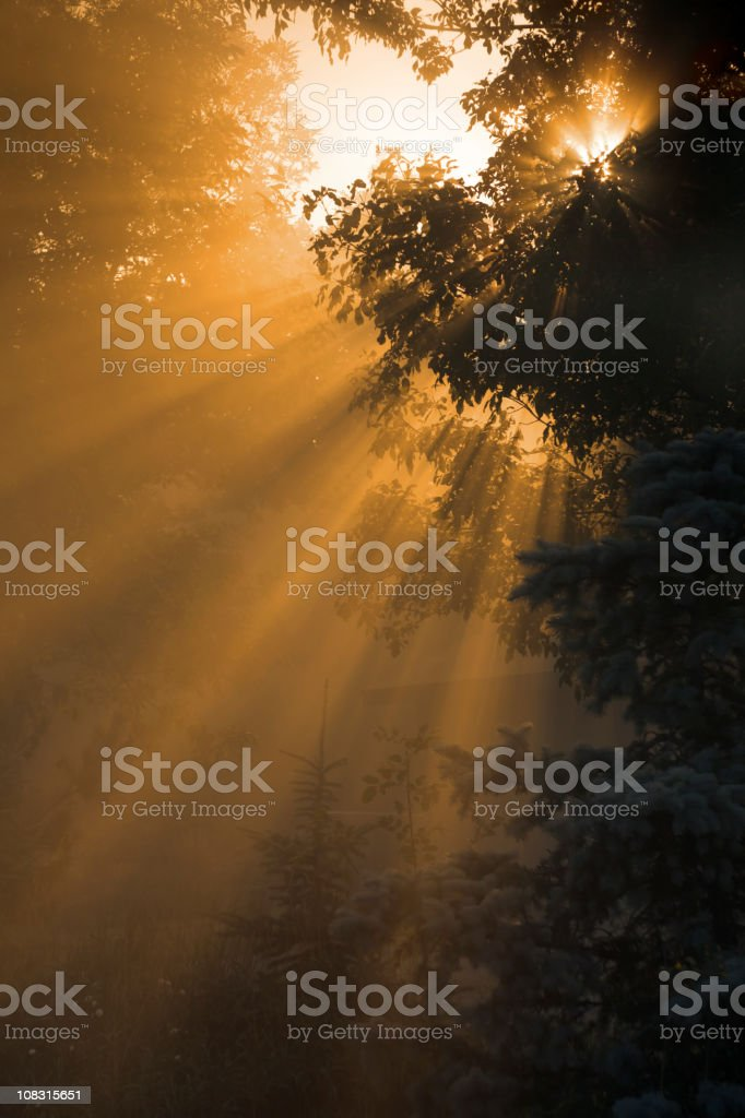 Misty Morning Sunrise; Sunlight Rays Through Fog, Tree Branches, Nature stock photo