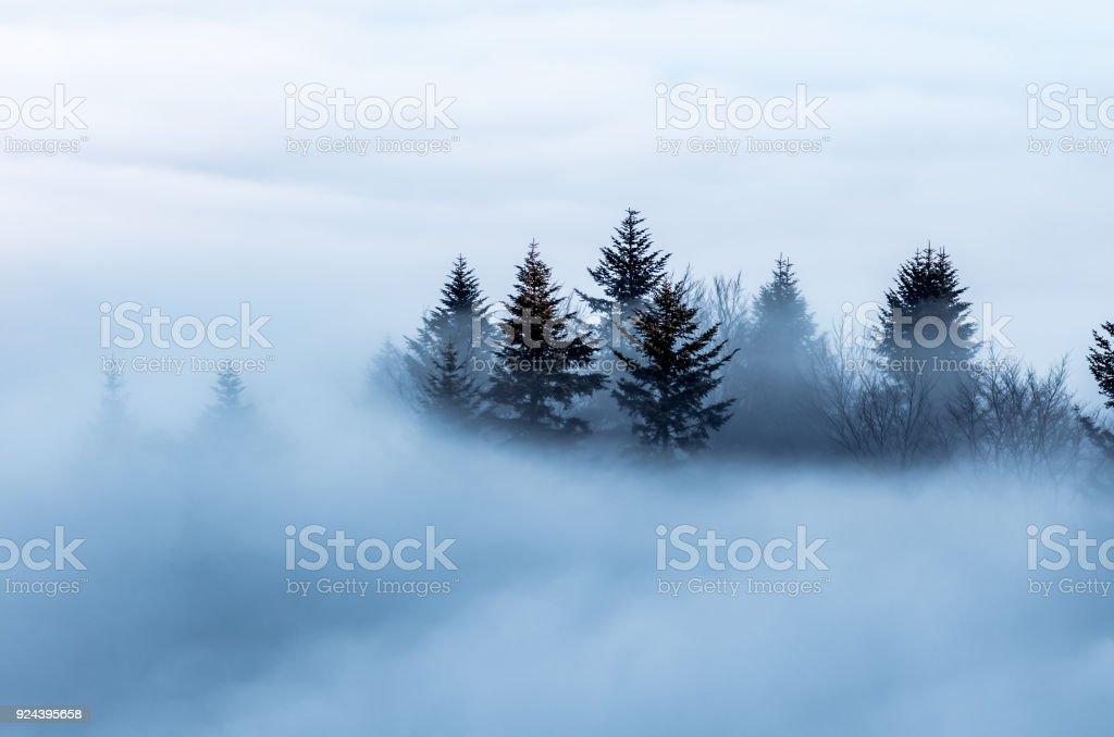 Nebligen Berglandschaft am Morgen, Bäume im Nebel, Polen – Foto