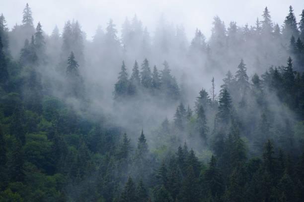 dimmiga bergslandskap - forest bildbanksfoton och bilder