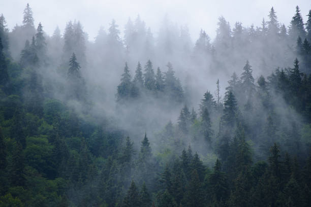 misty mountain landscape - trees in mist stock pictures, royalty-free photos & images