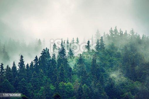 istock Misty mountain landscape 1257605805