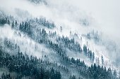 thick fog over a pine forest during winter