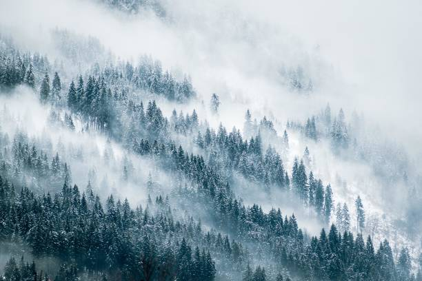 Misty Mountains thick fog over a pine forest during winter forest stock pictures, royalty-free photos & images
