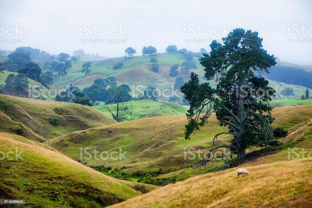 Misty New Zealand Landscape stock photo