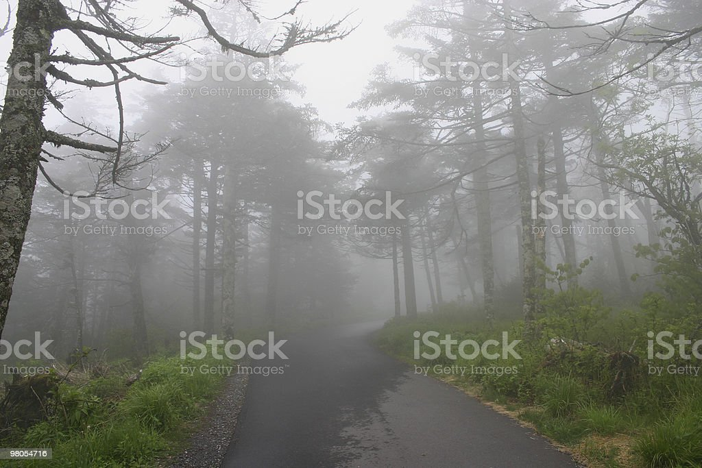Misty Path royalty-free stock photo