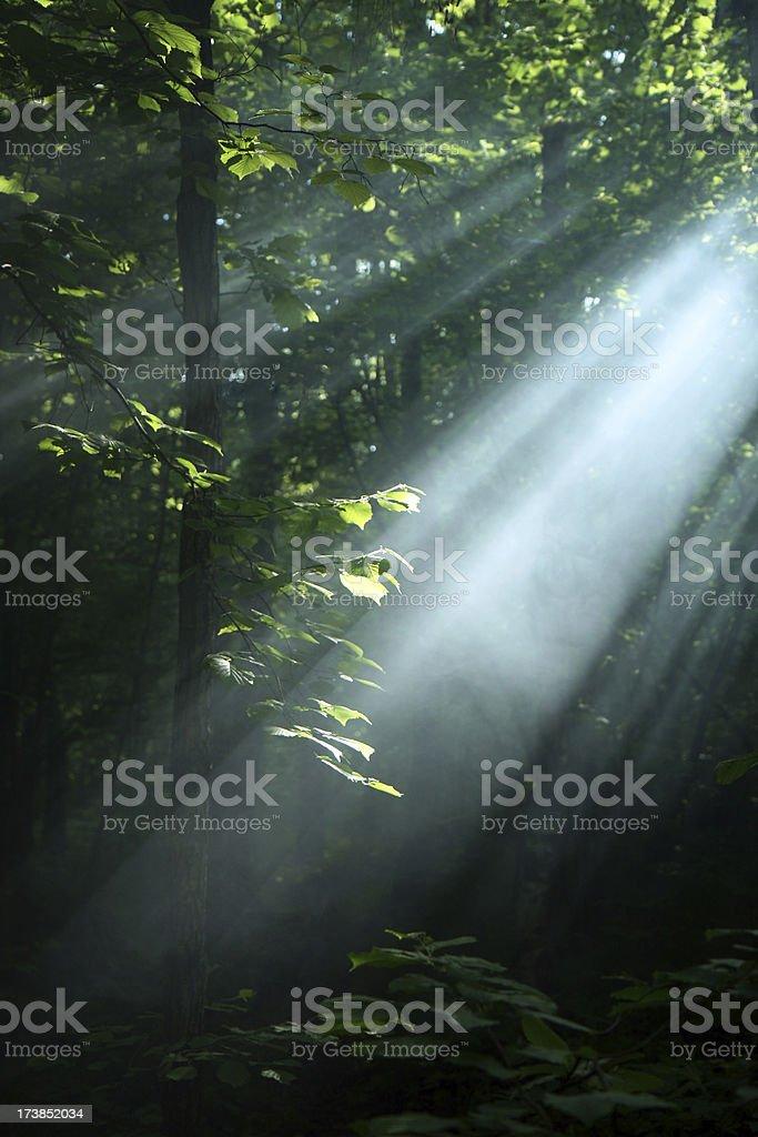 misty rays royalty-free stock photo