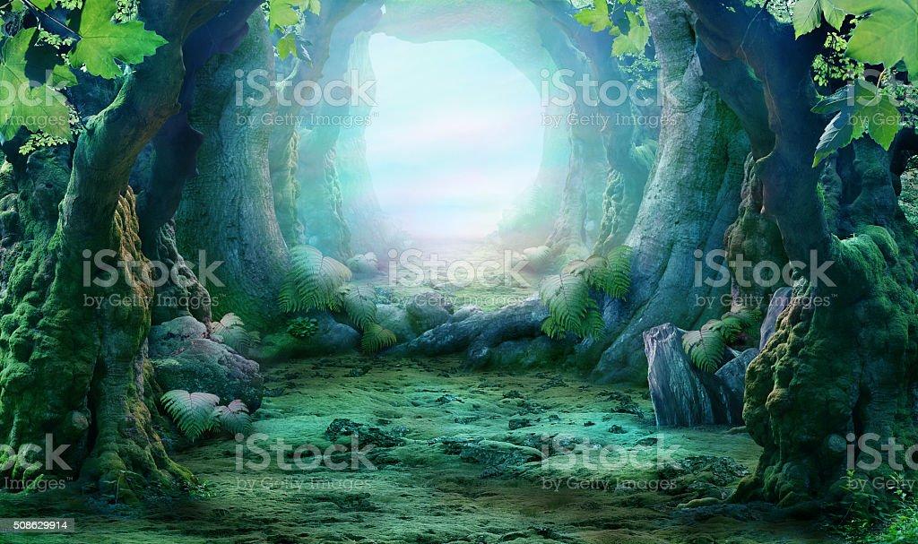 misty, romantic forest landscape stock photo