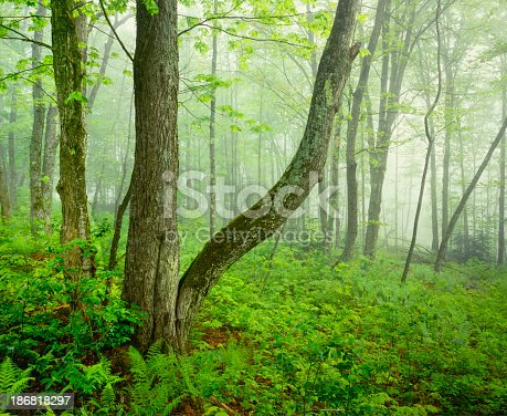 Misty Morning In The Green Mountains of Vermont