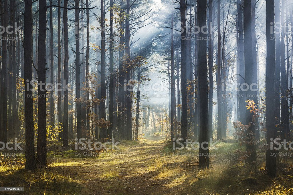 Misty spring forest - Morning Sun Beams royalty-free stock photo
