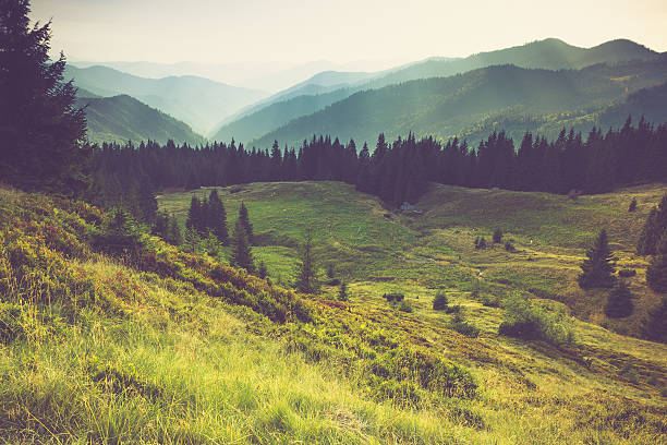 misty summer mountain hills landscape. - trees in mist stock pictures, royalty-free photos & images