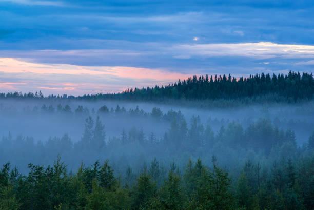 Misty summer night stock photo