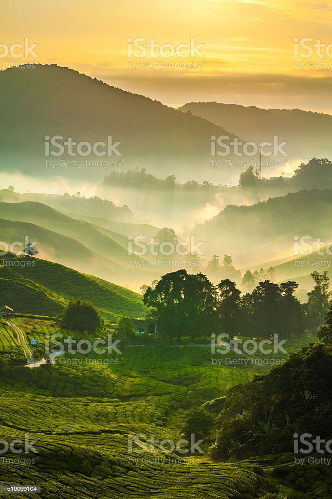 Misty sun rays over tea plantation in Cameron Highlands 3 stock photo
