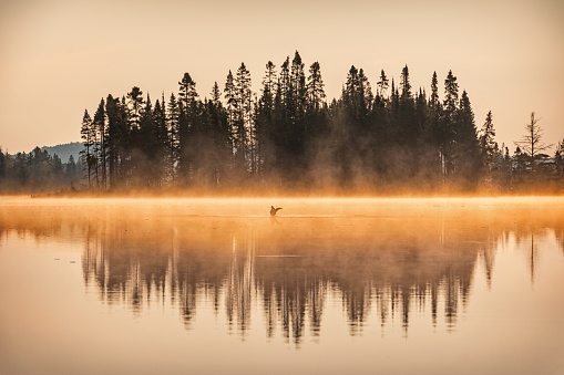 Misty Sunrise at Lake in Algonquin Provincial Park Ontario Canada