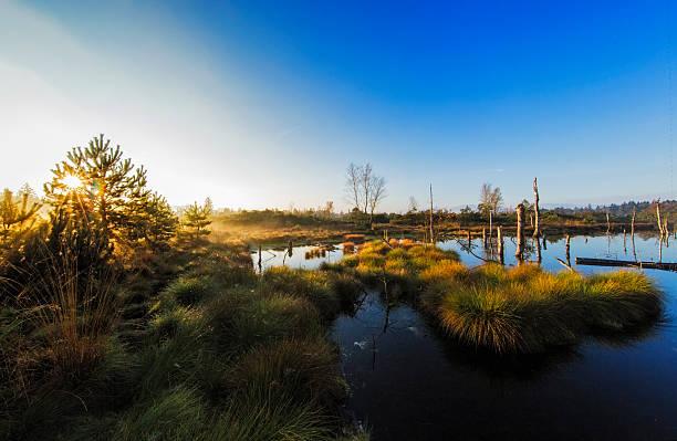 Misty sunrise over the marshland stock photo