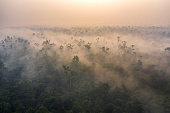 Drone aerial view of a misty sunrise on the island of Borneo (Kalimantan) over preserved rainforest. Unfortunately this mist is caused by smoke coming from slash and burn fires occurring most of the time during the dry and hot season. Kalimantan remains a hotspot place such as the Amazon where heavy deforestation happens on a daily basis.