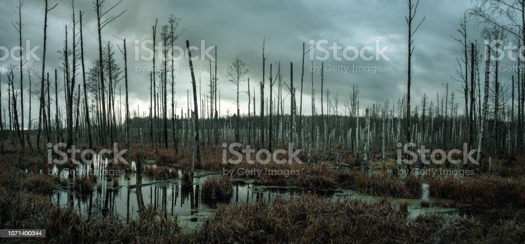 Ormandaki sisli bataklık - Royalty-free Arka planlar Stok görsel