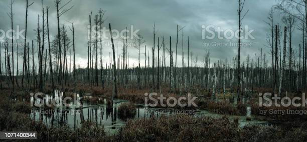 Photo of Misty swamp in the forest